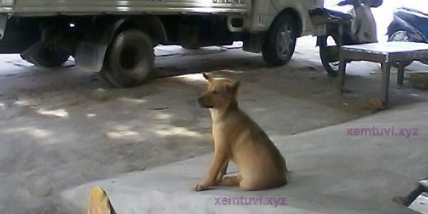 Câu chuyện cảm động về chú chó nhỏ bị chủ nuôi để thịt